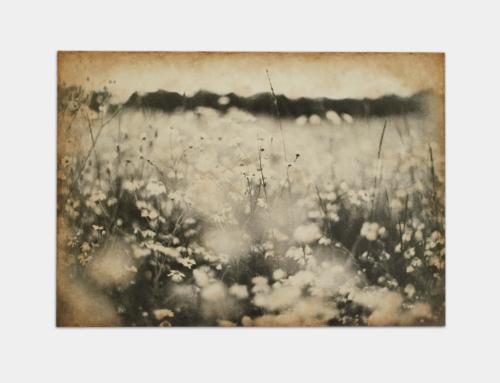 divlio lulugi | Wild flower