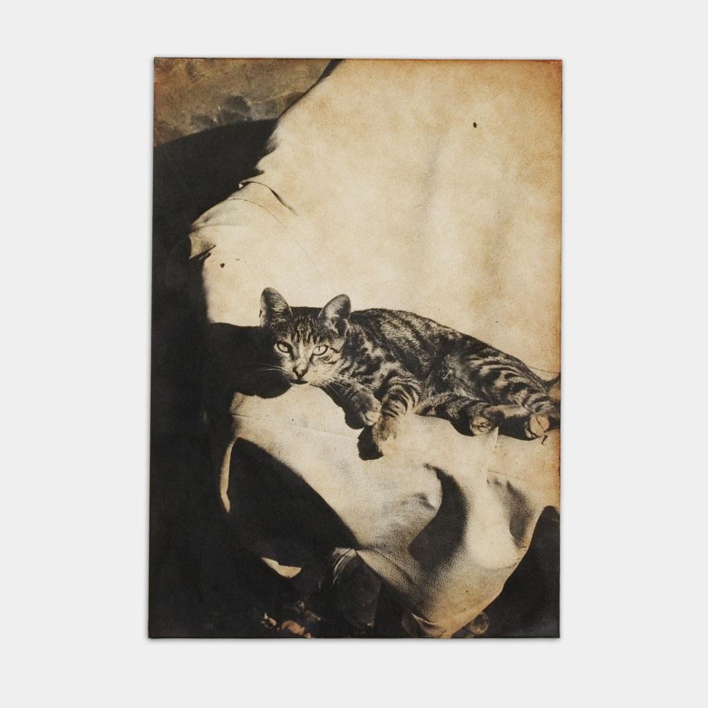猫の写真(正面)